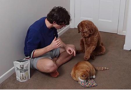 Парень показал, как он научил свою собаку гладить своего кота (видео)
