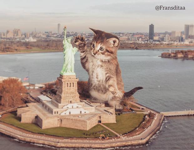 Фото №2 - Котзиллы наступают! Инстаграм дня, в котором гигантские котики захватывают мир 😽