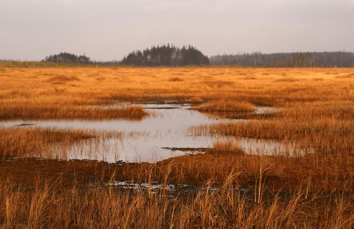 Фото №12 - Притягательная трясина: 12 самых живописных болот мира