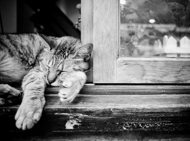 Фото №6 - Почему мы не помним наши сны (и еще несколько важных фактов о сновидениях)
