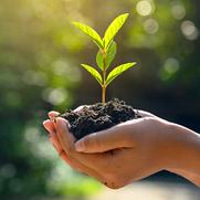 Насколько вы привыкли заботиться об экологии?