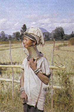 Фото №3 - Пучок травы Табьей
