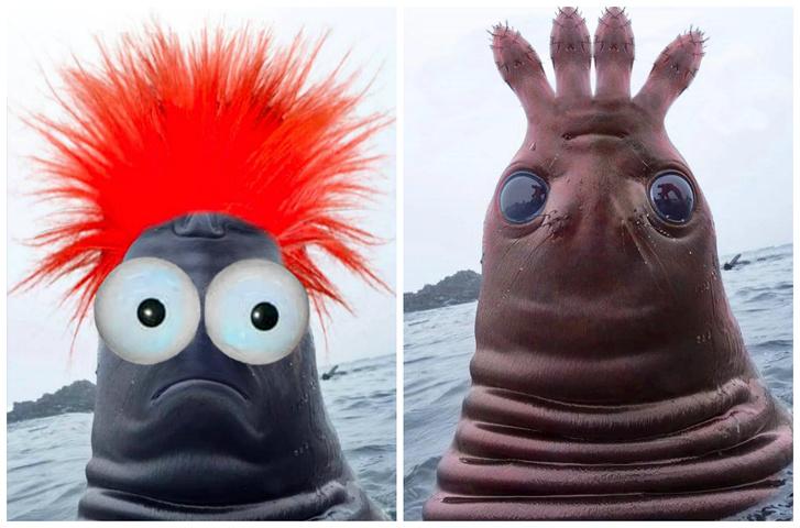 Фото №1 - Странное фото тюленя, похожего на пришельца, разошлось на мемы