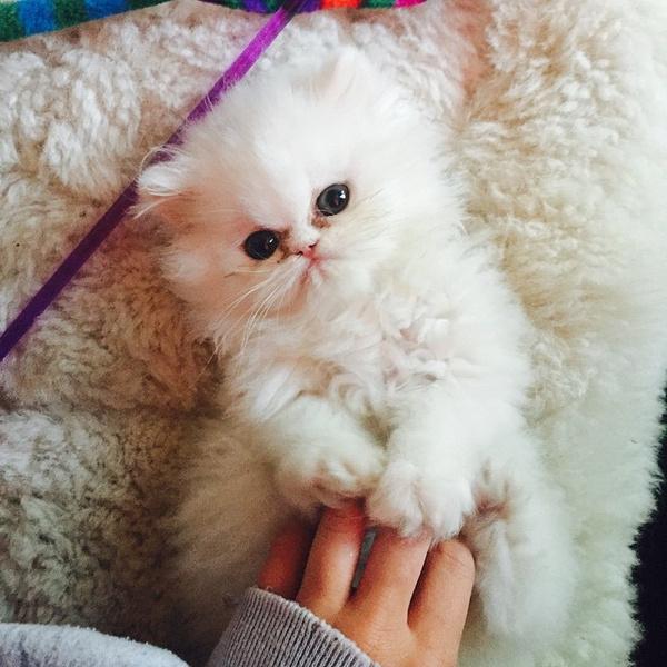 Фото №1 - Майли Сайрус завела супермилого котенка