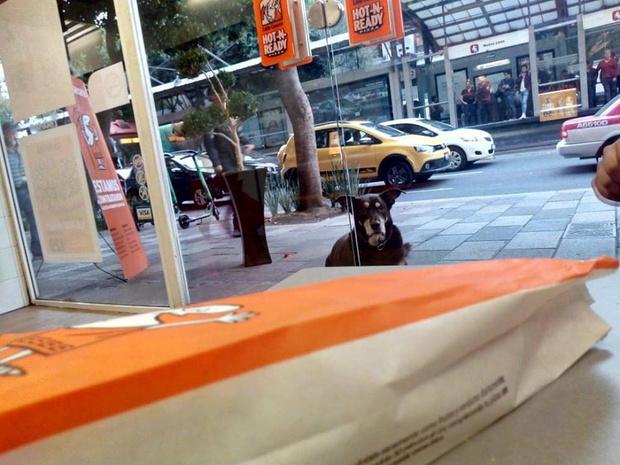 Фото №1 - Пес обожал выпрашивать у незнакомцев пиццу: почему он больше не сможет этого делать