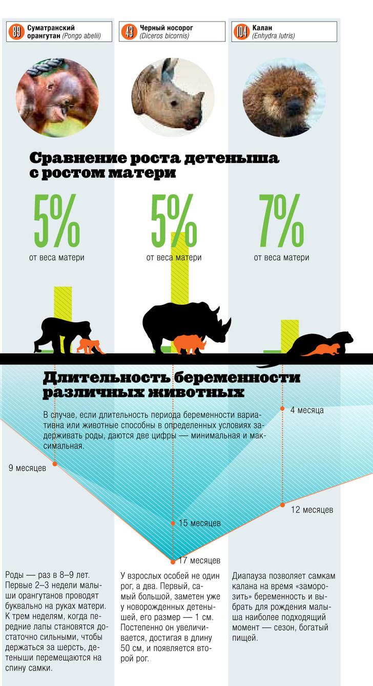 Фото №2 - Инфографика: детский сад