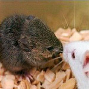 Фото №1 - Клоны замороженных мышей