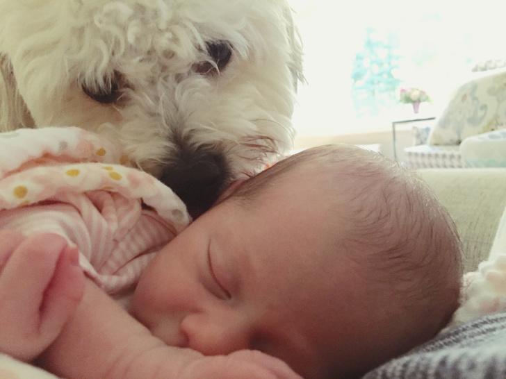 Фото №1 - Собака-герой спасла жизнь новорожденному малышу