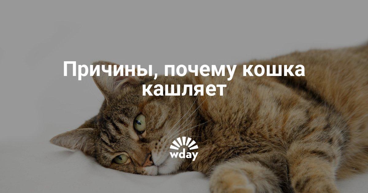 Кот кашляет вытянув шею и высунув язык. Почему кошка кашляет и что делать в такой ситуации