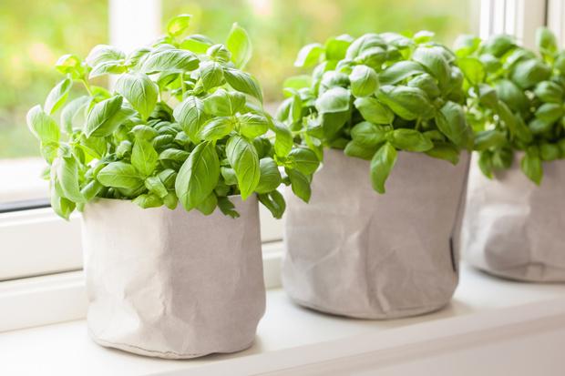 Фото №10 - 10 растений, которые выгоняют из дома плохую энергию