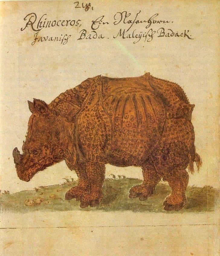 Фото №24 - Как в старину художники изображали животных, которых никогда не видели (25 странных существ)