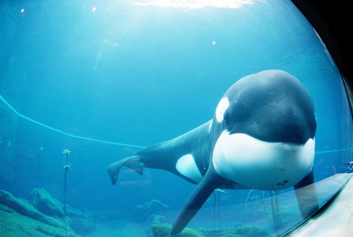 Фото №5 - Пришли к успеху: 7 животных, которые достигли в жизни большего, чем многие люди