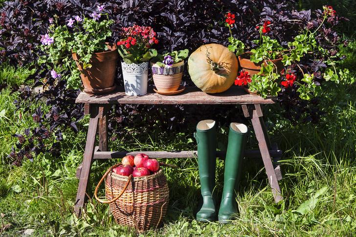Секреты садоводства от бабушек: как ухаживать за растениями