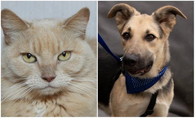 Фото №1 - Котопёс недели: кошка Клеопатра и пёс Дионис