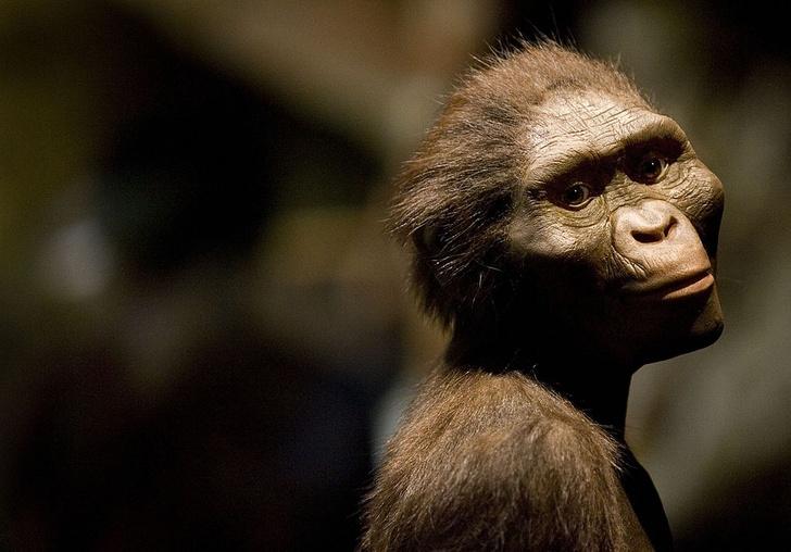 Фото №1 - Первые люди могли появиться в Европе, а не в Африке
