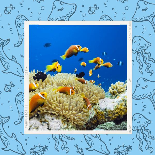 Фото №1 - Спасаем рыбок: самый милый и модный эко-тренд в косметике 🐟