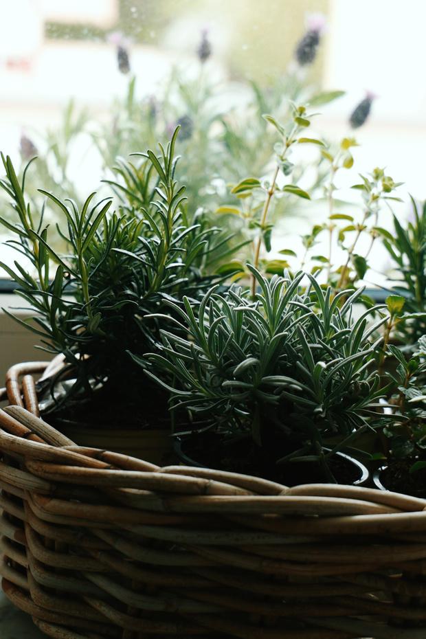 Фото №8 - 8 модных средиземноморских растений для балкона и патио