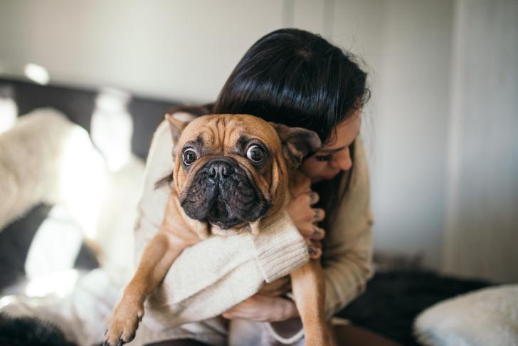 Фото №1 - 7 признаков, что у твоей собаки серьезный стресс, и что можно с этим сделать