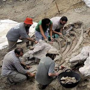 Фото №1 - Найден новый вид динозавра