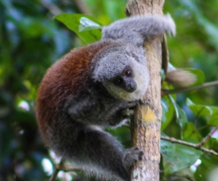 Фото №1 - Новый вид обезьян нашли в Бразилии