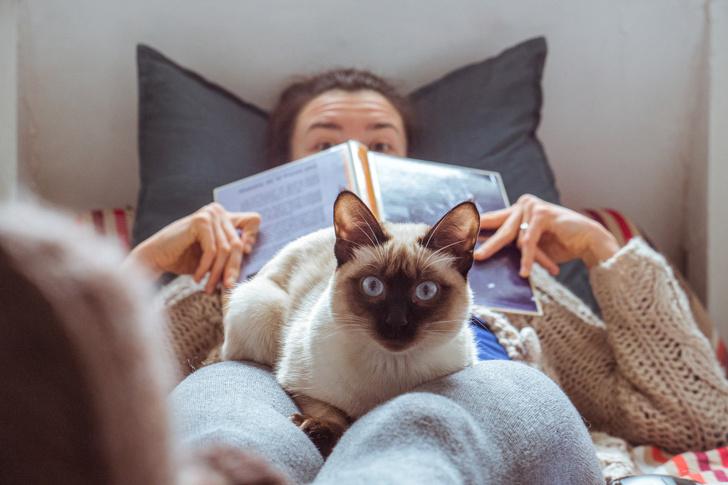 Фото №5 - 24 кошки, которые удивили своими геройскими поступками