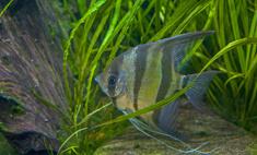 Описание и виды аквариумных рыбок