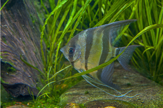 Описание аквариумных рыбок