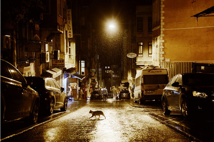 Фото №3 - Короли улиц: настоящие хозяева Стамбула