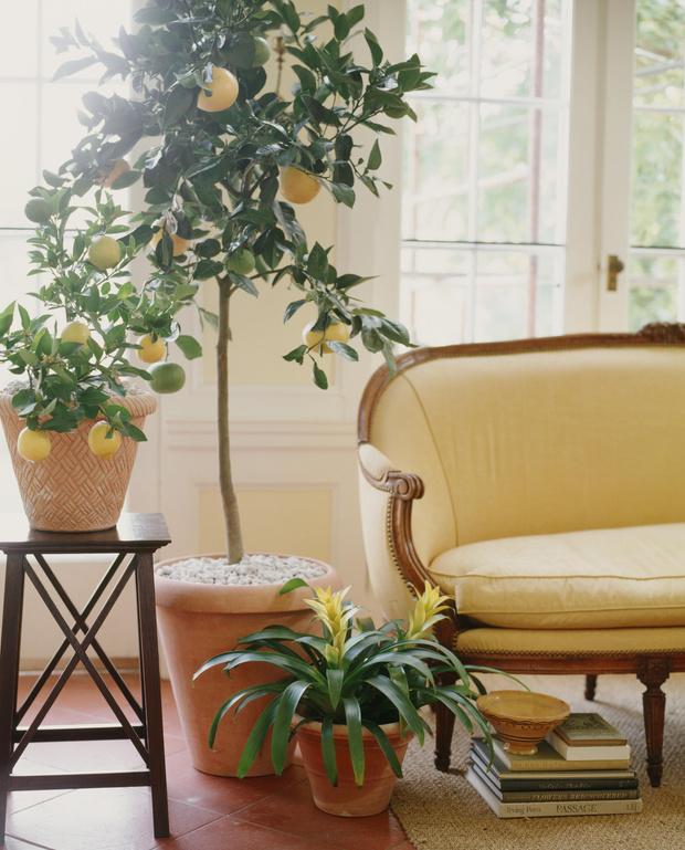 Фото №2 - 8 модных средиземноморских растений для балкона и патио
