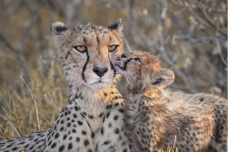 Фото №1 - Невозмутимая мать