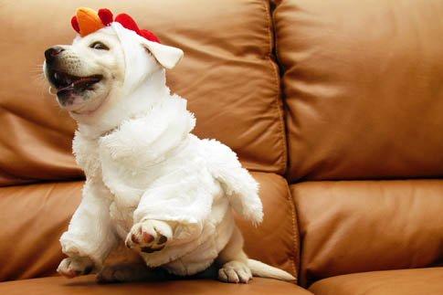 Фото №19 - Фотоподборка недели: собаки, которые уже готовы к Хэллоуину