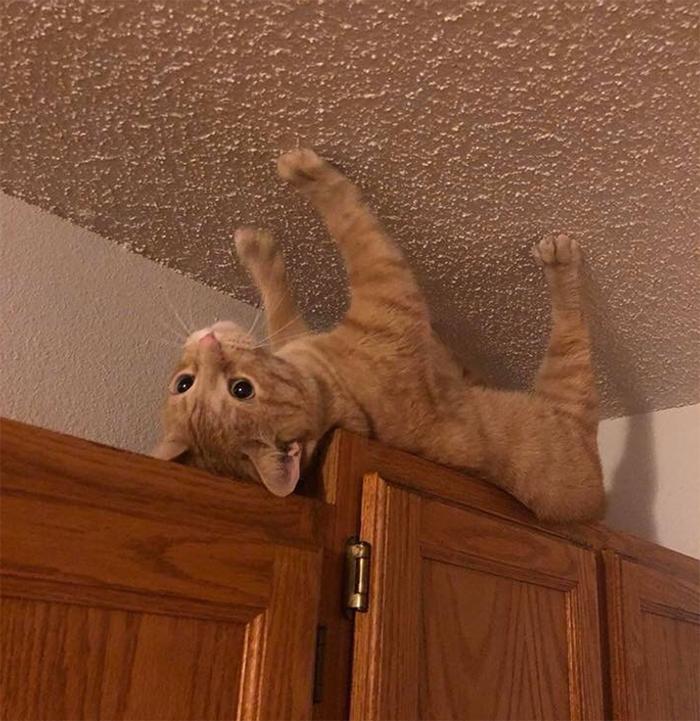 Фото №4 - 20 мемных котов, похожих на известных режиссеров