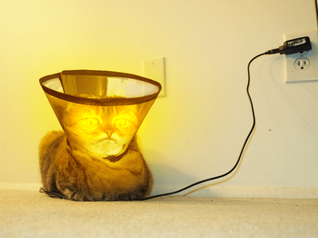 Фото №8 - Лучше фотожабы на кота в защитном воротнике