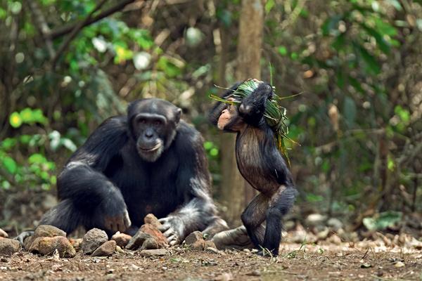 Фото №6 - 12 обезьян