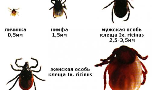Фото №1 - Петербургский биолог рассказал, когда ждать пика активности клещей в этом году