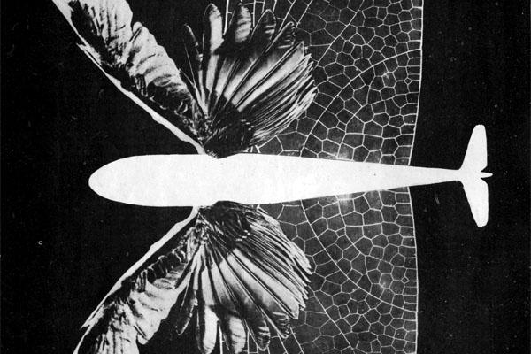Фото №1 - XX век: когда же самолет взмахнет крыльями?