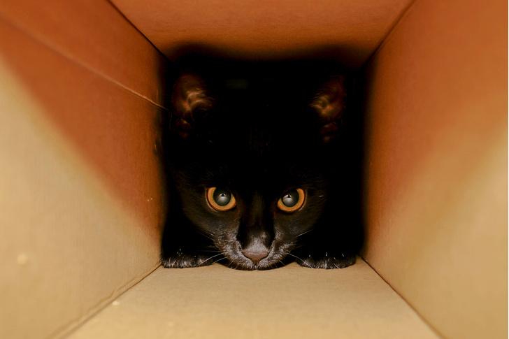 Фото №1 - Физики заявили, что нашли способ решить парадокс кота Шрёдингера