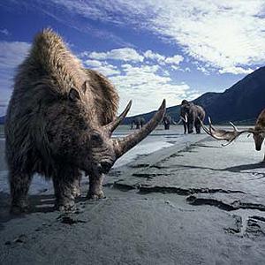 Фото №1 - Носорог в песочнице