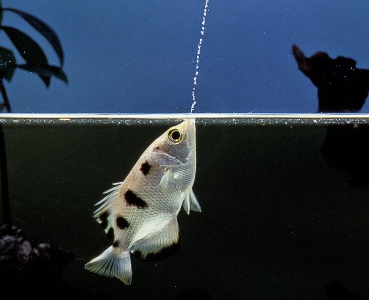 Фото №3 - Рыбы-физиономисты, космическая музыка и другие новые открытия