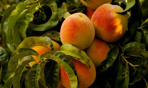 Фото №1 - Кардиолог назвала продукты, которые помогут восстановиться после пневмонии