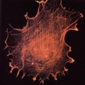 Фото №1 - Раковые клетки уничтожат термическими нанозондами