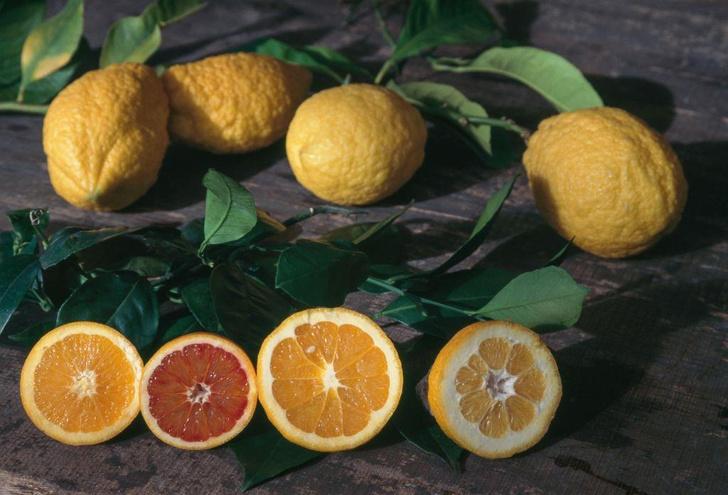 Фото №1 - Назван полезный для зрения фрукт
