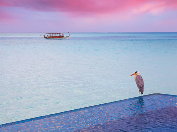 Фото №3 - Мальдивы: секс, спа и дайвинг