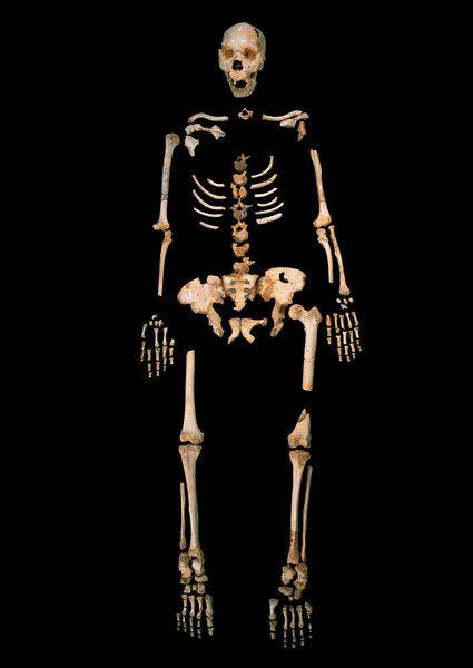 Фото №1 - Ученые восстановили древнейший геном человека