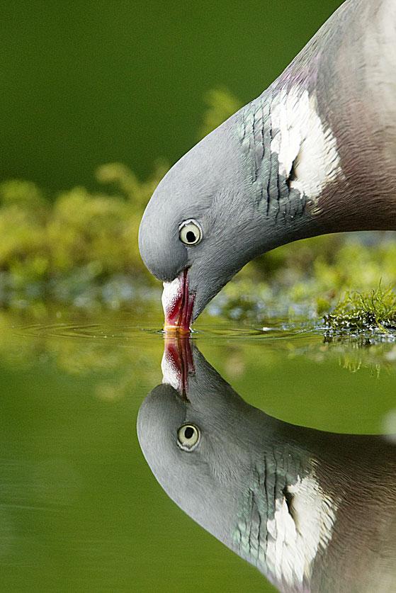 Фото №7 - Всемирный водопой