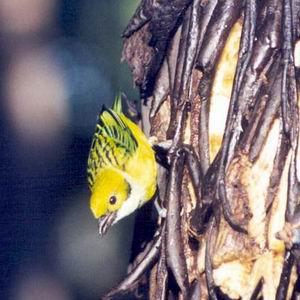 Фото №1 - Голоса птиц оцифровали
