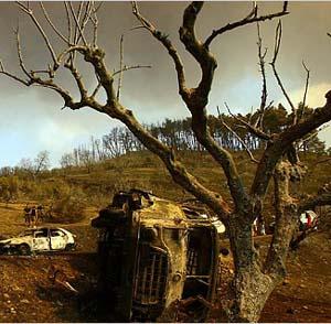 Фото №1 - Леса в Греции восстановятся через 20 лет