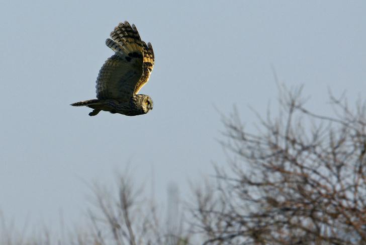 Фото №6 - Властелины ночи: почему совы не то, чем кажутся?