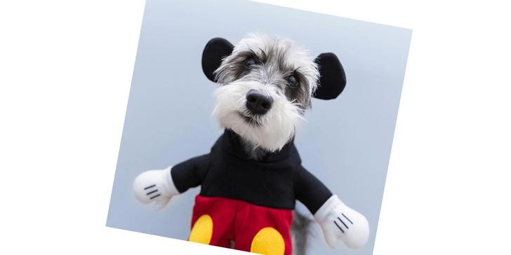 Фото №19 - 20 очаровательных собак в костюмчиках по мотивам мультфильмов Disney
