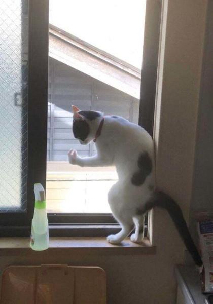 Фото №2 - Мой кот сломался: 20 фото питомцев в очень странных позах
